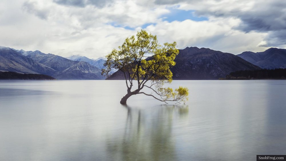 DSC_0230_wanaka_tree_lake