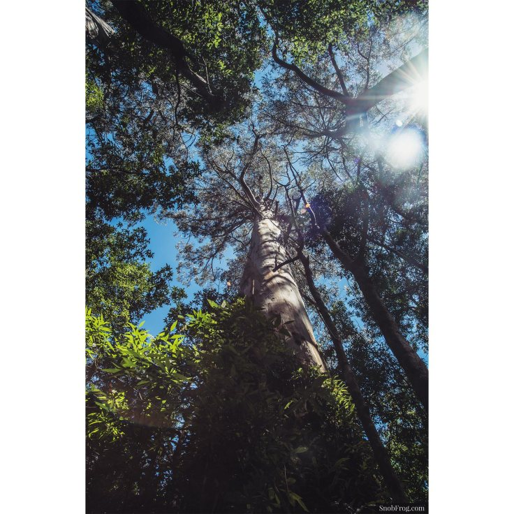 DSC_9892_otway_rainforest