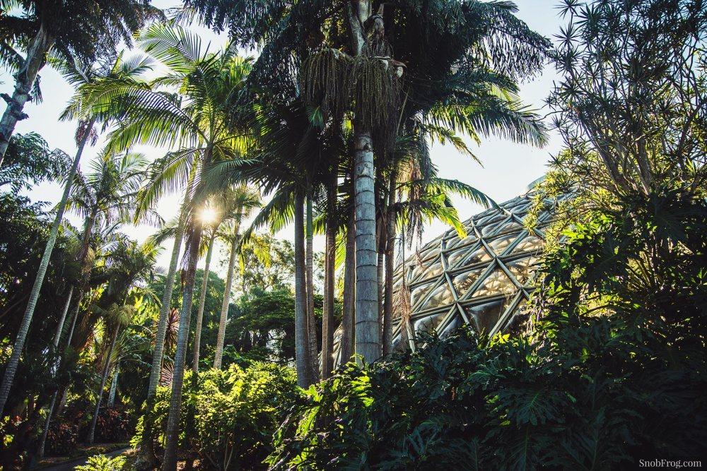 DSC_1123_brisbane_botanic_gardens