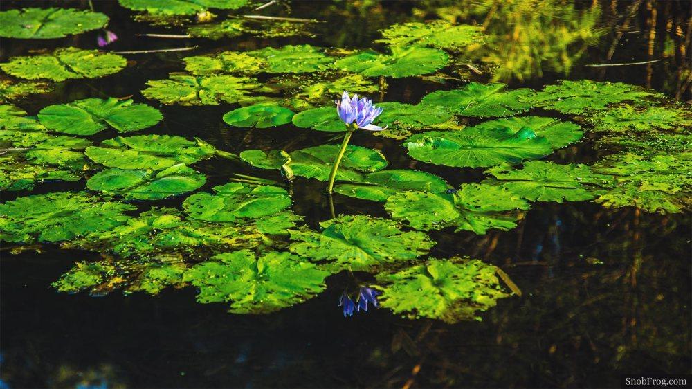 DSC_1146_brisbane_botanic_gardens